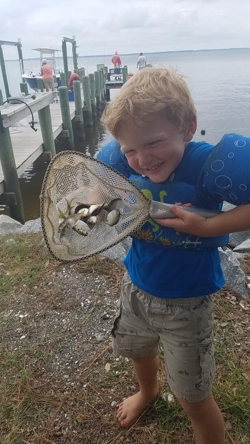banjaminfish