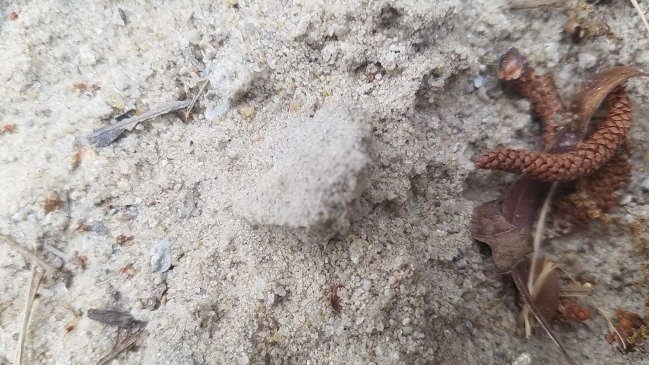 Ant Hill