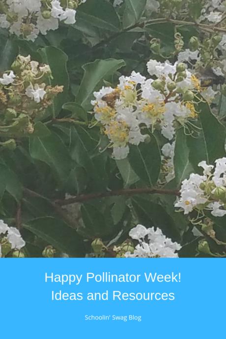 Pollinator Week Pinterst