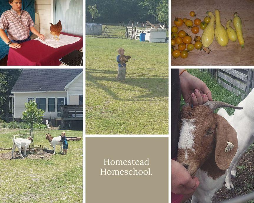 Homestead Homeschool.